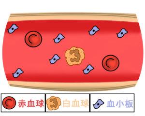 赤血球白血球血小板